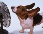 Seis Consejos para Proteger a las Mascotas en la Temporada de Tormentas