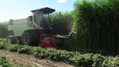 Commercial Hemp Bill Signed into Law