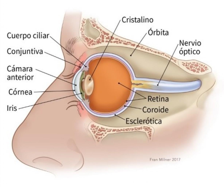 ¿Qué es el cáncer de ojo?