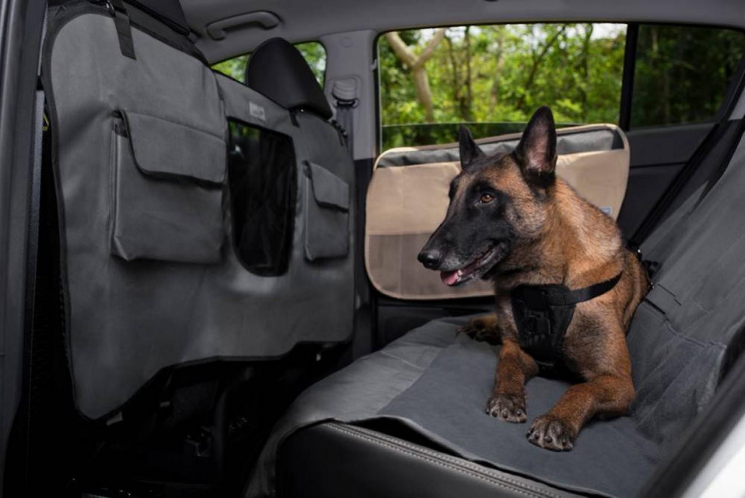 Securidad al conducir  con su mascota