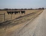 Oklahoma se prepara para un posible brote de fiebre porcina africana
