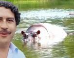 Hipopótamos de Pablo Escobar se  reproducen y causan alarma