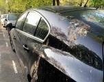 Como proteger tu auto de los desechos que nos dejan los pájaros?