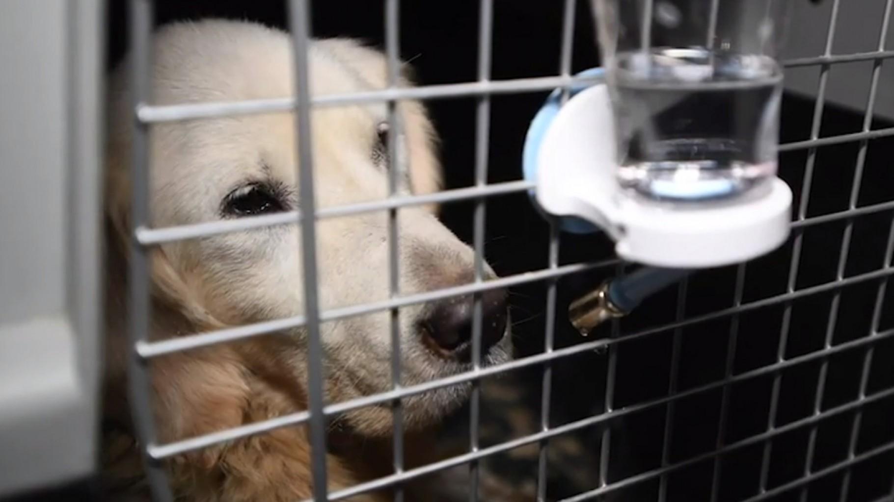 Nueva Ley Alienta a residentes a rescatar animales