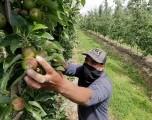 Gobernador de Washington firma proyecto de ley sobre horas extras de trabajadores agrícolas